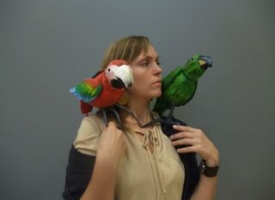 09_papegoejer