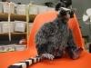 16_lemur